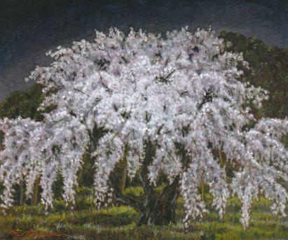 Sakuranisimura